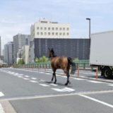 大井競馬場の馬脱走現場はどこ?衝突事故で馬や人のケガ被害は?