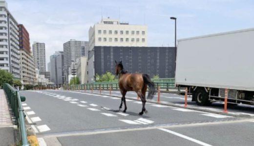 大井競馬場の馬脱走(逃走)現場はどこ?衝突事故で馬や人のケガ被害は?