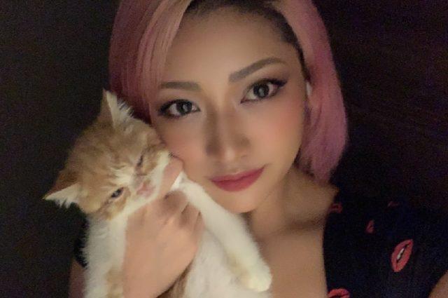 木村花がガス自殺で飼い猫はどうなった?